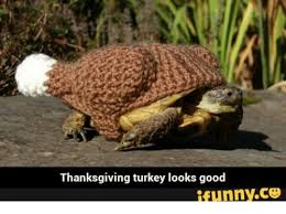 Thanksgiving Turkey Meme - thanksgiving turkey looks good ifunnyco thanksgiving meme on sizzle