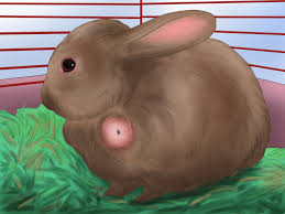 like a bunny how to raise a healthy bunny with pictures wikihow