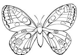 63 coloring pages butterflies images