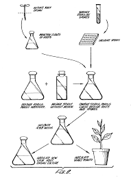 patent ep0209627a2 method for producing axenic vesicular