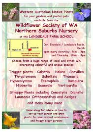 australian native plant nursery northern suburbs branch plant sale 22 april u2013 wildflower society