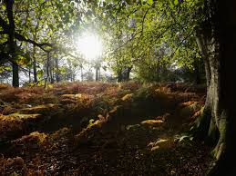 trees under threat the oak beech and birch could be lost if