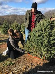 How To Trim A Real Christmas Tree - decorating choosing the perfect christmas tree walking on sunshine
