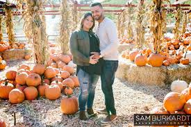 pumpkin patch maternity orchard maternity portraits silverman s farm easton ct sam