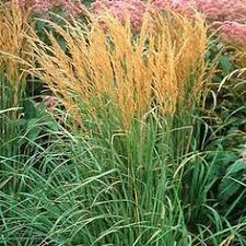 17 top ornamental grasses grasses plants and gardens