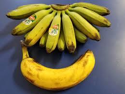tiny banana these tiny bananas banana for scale album on imgur