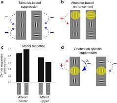 cat orie si e auto b attention determines contextual enhancement versus suppression in
