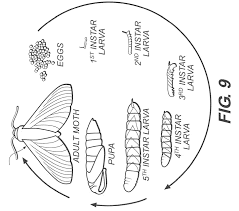 free coloring pages of life cycle of a silkworm butterfly life