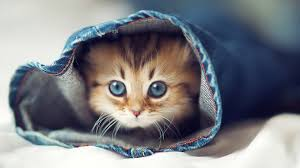 Meme Desktop Wallpaper - cute cats cat wallpaper meme hd wallpapers photos