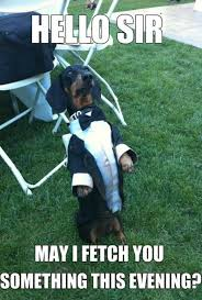 Top Memes 2014 - top 8 dachshund memes that are going to crack you up werulememes