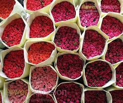bulk roses wholesale roses diy wedding flowers