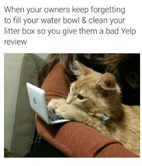 Grumpy Cat Meme Clean - when your owners keep forgetting to fill your water bowl clean