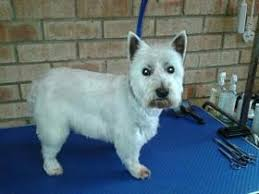 Creature Comforts Grooming Creature Comforts Dog Clipping And Grooming In Bridport Dt6 5aa