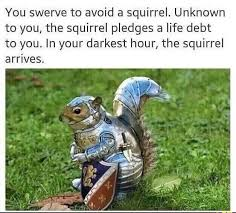 Squirrel Nuts Meme - squirrel knights of the nut table meme by osawaab memedroid