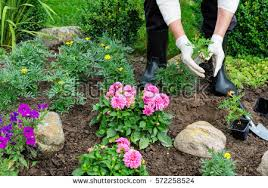 horticulture stock images royalty free images u0026 vectors