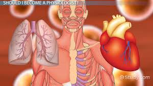 Human Anatomy Careers How To Become A Physiologist Education And Career Roadmap