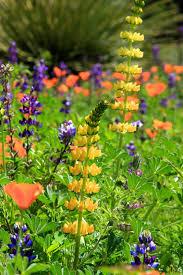 jean bjerke u0027s photo blog rancho santa ana botanic garden