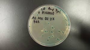 straubel ap biology 2015 16