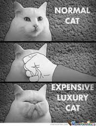 Rich Cat Meme - rich people by kasache meme center