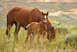 mustang horse the horse network horse rescue directory