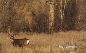 hunting wallpaper qygjxz