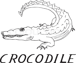 hand draw a crocodile style sketch on a black and white background