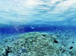 full hd p underwater wallpapers hd desktop backgrounds