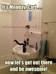Monday Cat Meme - lolcats monday page 4 lol at funny cat memes funny cat