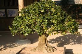 small trees descriptions photos advices videos home