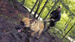 belgian shepherd navy seals the dogs of war where canine soldiers are trained the globe and