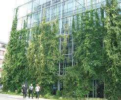 Stainless Steel Cable Trellis 16 Best Green Wall Images On Pinterest Green Walls Green