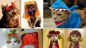 cats in halloween costumes
