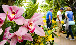 Okc Botanical Gardens by A Kaleidoscope Of Colors At Myriad Botanical Gardens News Ok