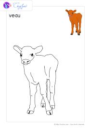 animaux ferme dessin a colorier veau coloriage ferme pinterest
