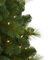 foxtail pine tree treetopia