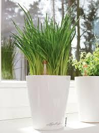 mini deltini self watering planter for houseplants gardeners com