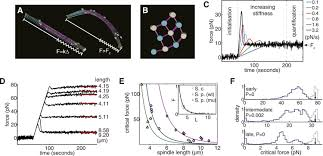 mechanical design principles of a mitotic spindle elife