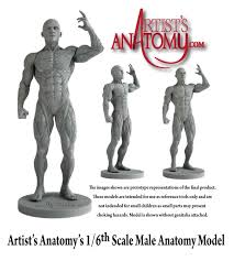 Human Figure Anatomy One Sixth Scale Presenting Artist U0027s Anatomy