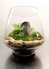 25 unique mini terrarium ideas on pinterest terranium ideas