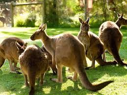 wildlife and zoos nature and wildlife victoria australia