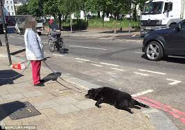 london woman drags dead dog street collapses