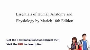 Human Anatomy And Physiology By Elaine Marieb Pdf Practice Test Bank For Essentials Of Human Anatomy And Physiology