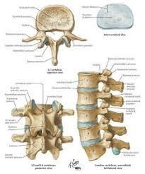 Anatomy Of The Human Skeleton Ii Osteology 6b The Hand 1 The Carpus Gray Henry 1918