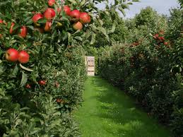 Fruit Garden Ideas Orchard Choose To Grow Fresh Fruit In Their Backyard For