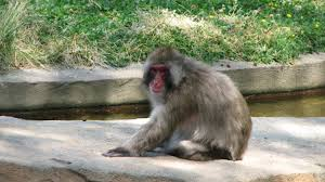 zoo stretchingittotravel