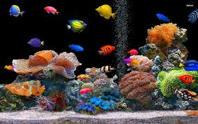 fish images free download excited animall hd wallpaper