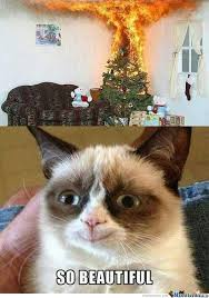 Mad Cat Memes - angry cat is not always mad by darainshine meme center