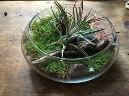 più di 25 fantastiche idee su terrarium bowls su pinterest