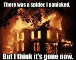 Spider Fire Alarm Meme - 18 best funny memes images on pinterest funny photos funny stuff