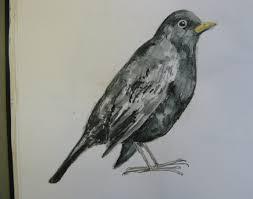 bird drawings agnesandcora